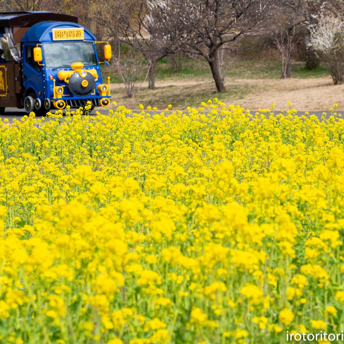 春です!!  (メジロ)  2020/03/09_d0146592_23223466.jpg