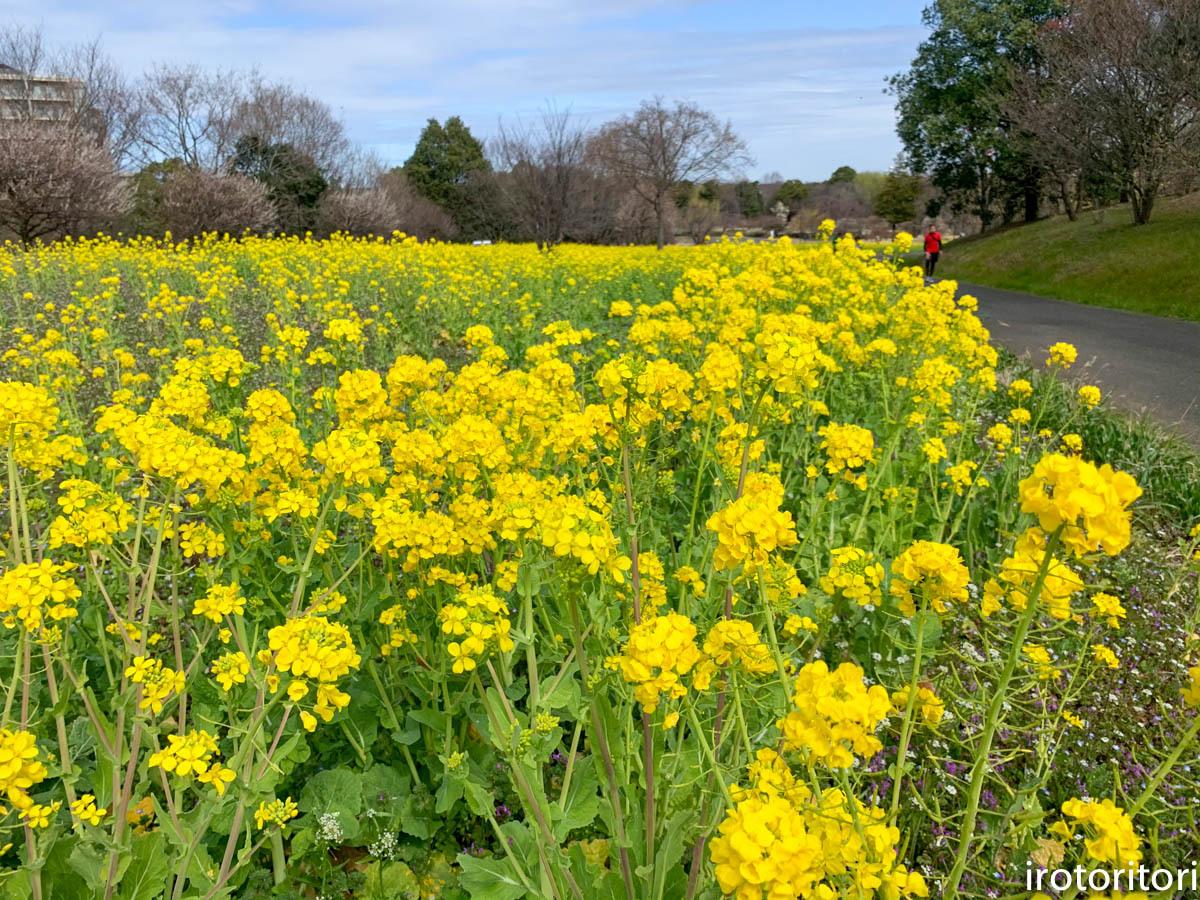 春です!!  (メジロ)  2020/03/09_d0146592_23224634.jpg