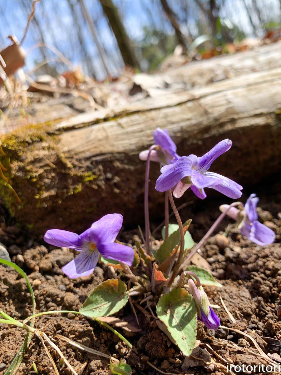 春です!!  (メジロ)  2020/03/09_d0146592_23230489.jpg