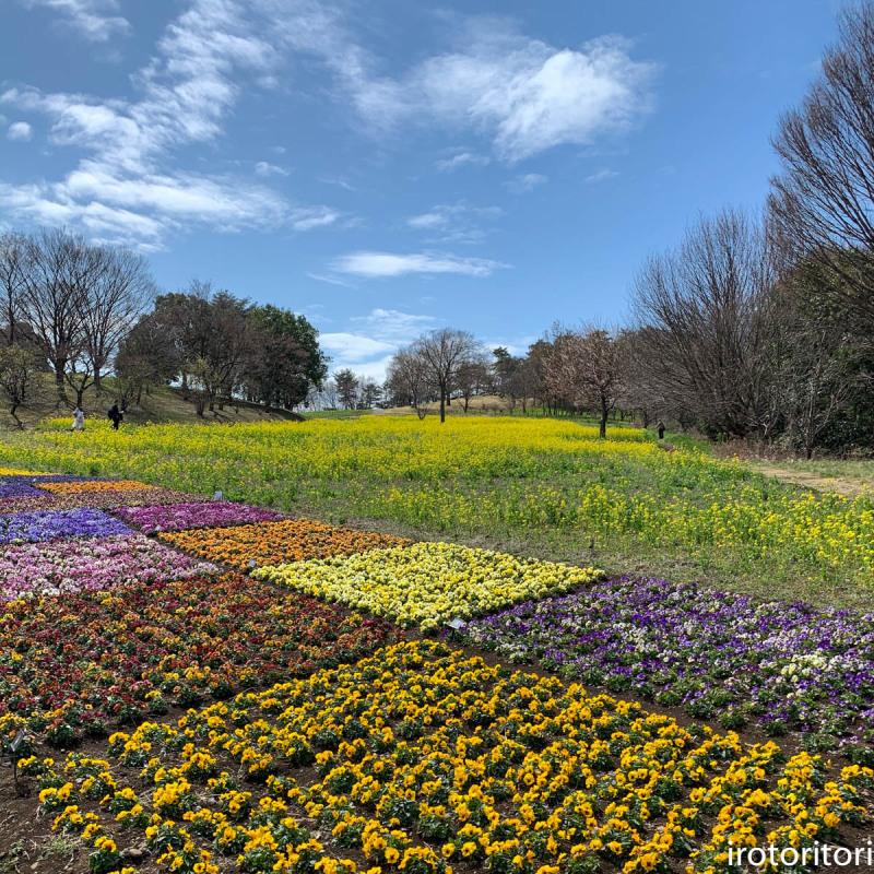 春です!!  (メジロ)  2020/03/09_d0146592_23315093.jpg