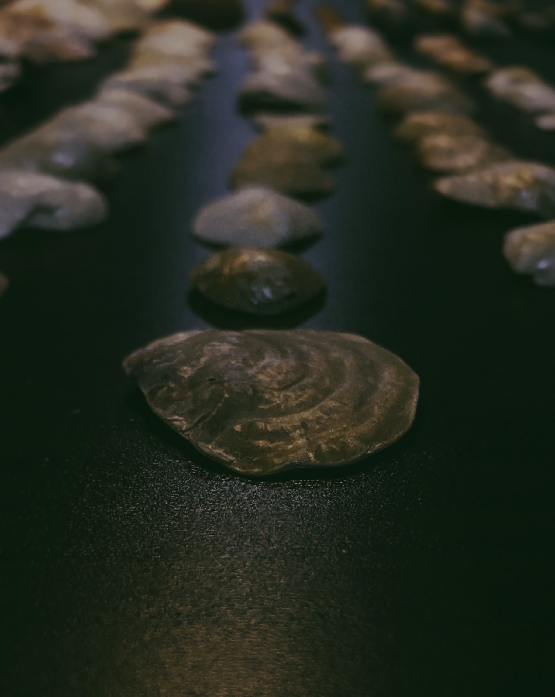 貝殻拾い🐚_c0203401_11232521.jpeg
