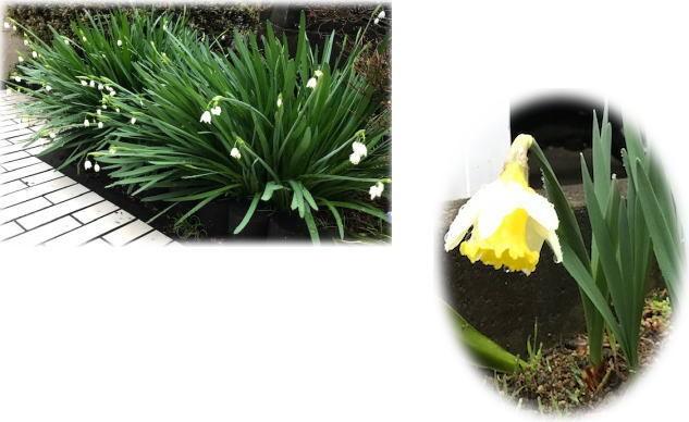 春の足音が…_d0070316_14252534.jpg