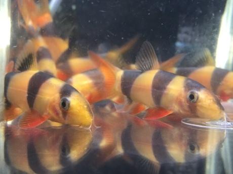 200312 熱帯魚 金魚 めだか 水草_f0189122_12352029.jpeg