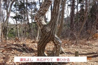 戸神山_e0265627_15355037.jpg