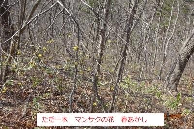 戸神山_e0265627_15374469.jpg