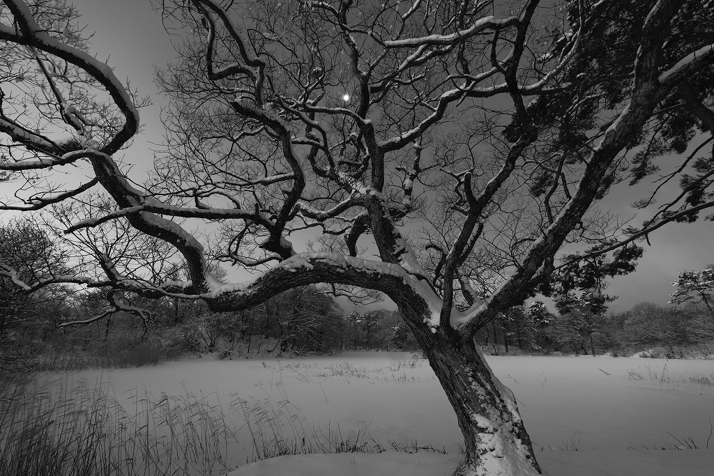 寒月湖畔図_f0050534_18033798.jpg