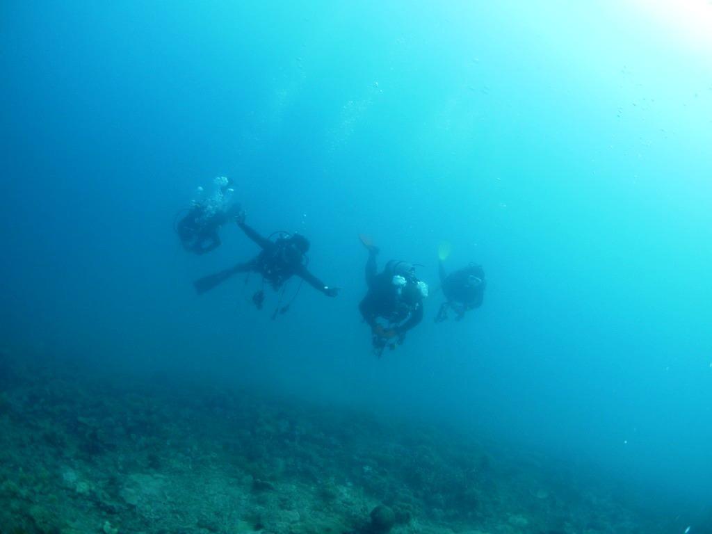 湾内でのんびり潜ってきました(#^^#)_a0189838_13252911.jpg