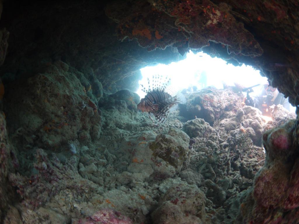 湾内でのんびり潜ってきました(#^^#)_a0189838_13310052.jpg