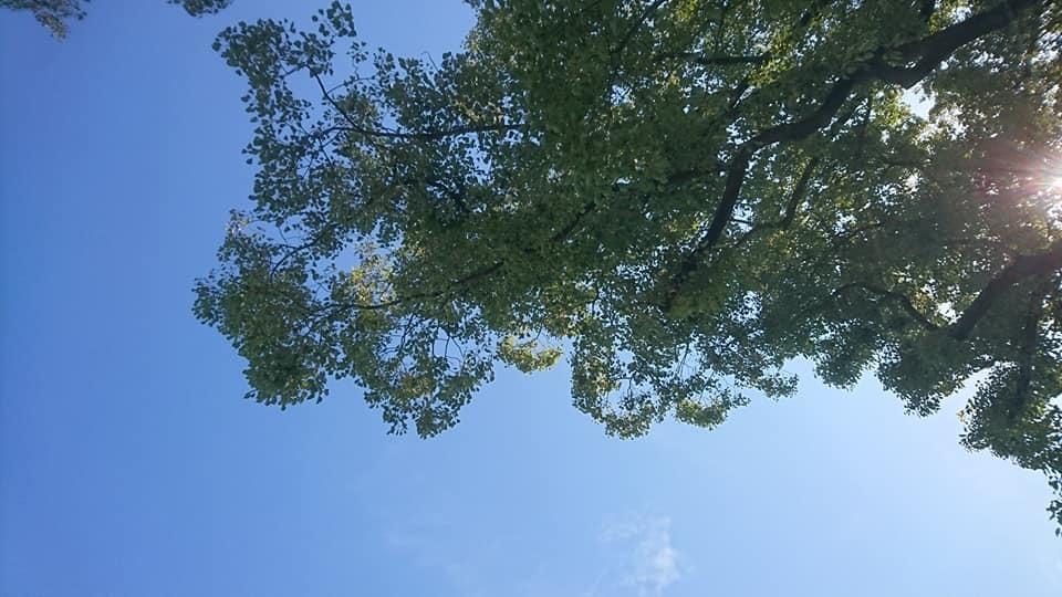 鶴舞公園へ行ってきました♪_f0373339_15251842.jpg
