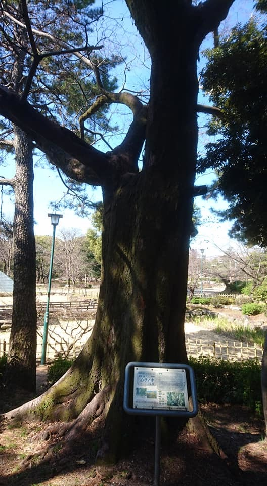 鶴舞公園へ行ってきました♪_f0373339_15281358.jpg