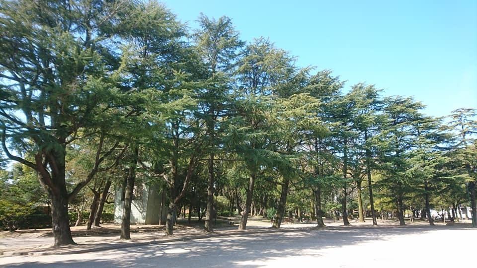 鶴舞公園へ行ってきました♪_f0373339_15360400.jpg