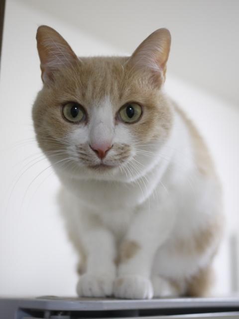猫のお留守番 しゃくちゃん編。_a0143140_22273257.jpg