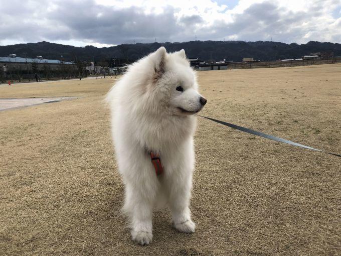 2020年冬 群馬~岐阜~石川県旅行 その3_f0128542_01530060.jpg
