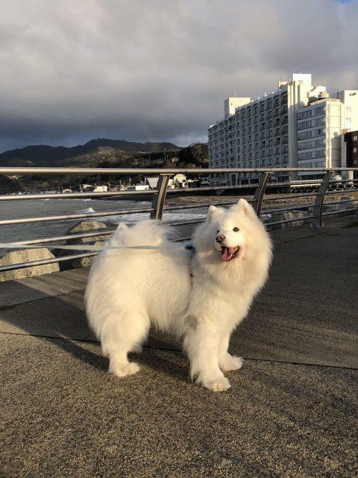 2020年冬 群馬~岐阜~石川県旅行 その3_f0128542_02104287.jpg