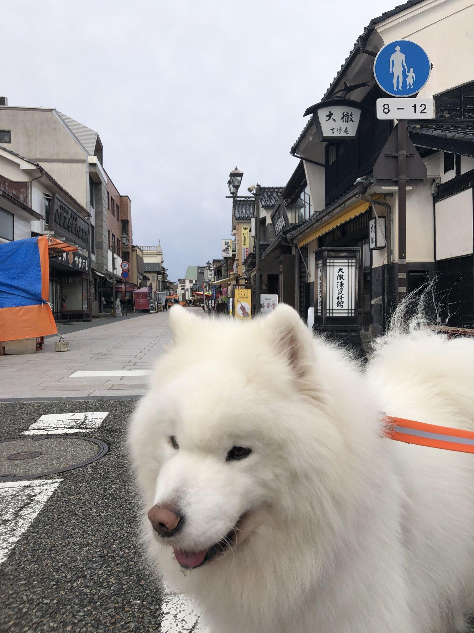 2020年冬 群馬~岐阜~石川県旅行 その3_f0128542_02181179.jpg
