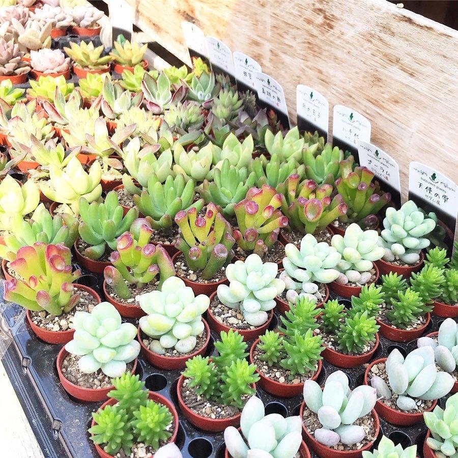 おすすめの植物_f0220152_18335520.jpg