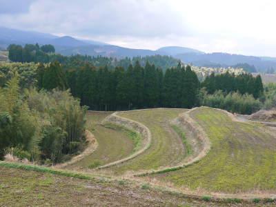 菊池水源棚田米 豊かな森と清らかな水が育んだ一般流通のない大変貴重なお米!令和元年度分は残りわずか!_a0254656_16414008.jpg