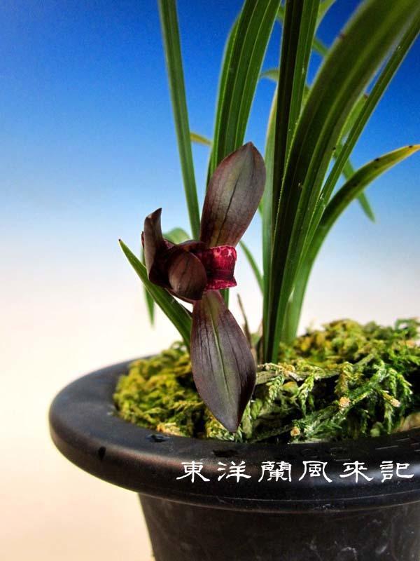 烏天狗                            No.2014_d0103457_09585217.jpg