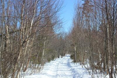 冬のトレイル_c0353373_04382486.jpg