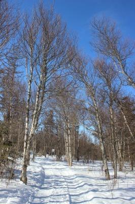冬のトレイル_c0353373_04383851.jpg