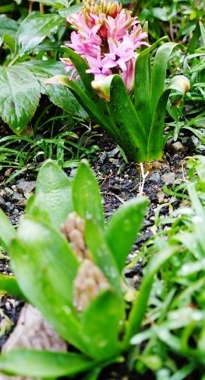 春を確認~☆_e0167795_17281075.jpg