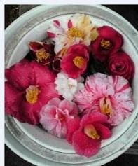 椿の花皿_a0051297_10511935.jpg