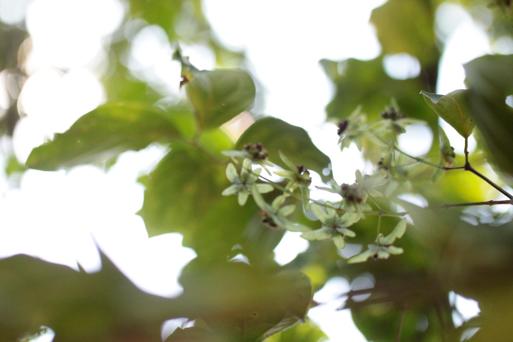 クバルスピアン4, Kbal Spean 翠 -Siem Reap-2012-_d0011713_10364329.jpg