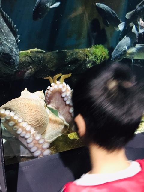 クラゲに癒された日_a0126418_11020931.jpg