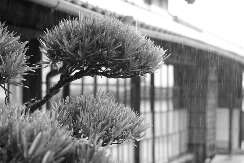 茶和や香(88)、六鹿茶遊会(77)_b0220318_15335213.jpg