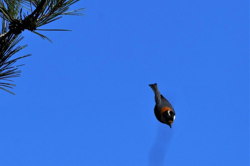 お山の鳥さん③_b0405327_13243352.jpg