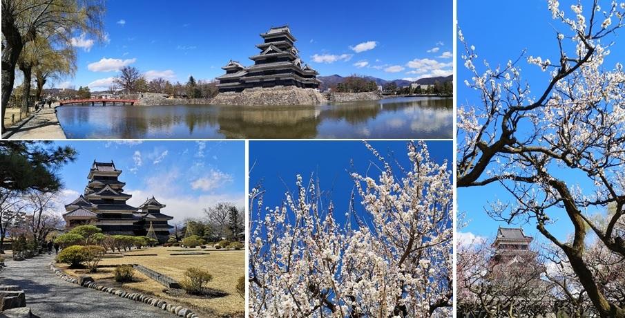 青空に松本城と_a0212730_21351233.jpg