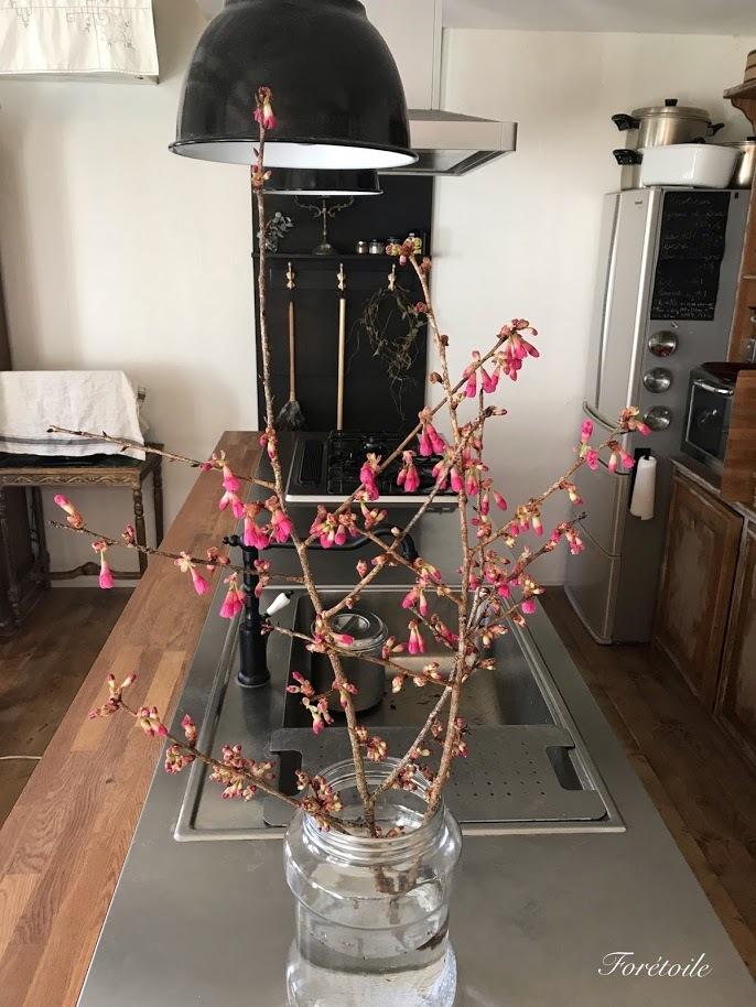 桜の枝_f0377243_14282051.jpg