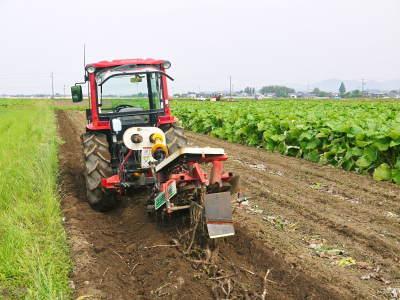 有機栽培の水田ごぼう 令和2年も元気に成長中!今年は例年通りの5月上旬より出荷予定です!!_a0254656_18110448.jpg