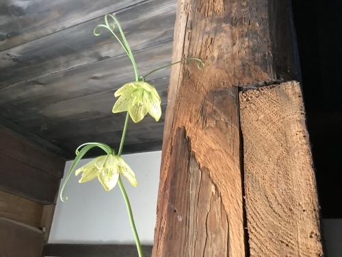 花を楽しむ器たち~6_d0336460_19384437.jpeg