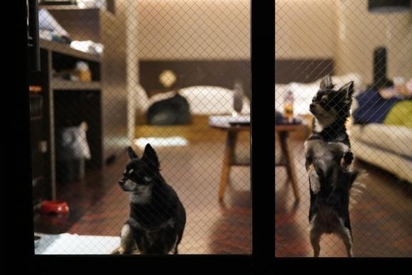ペットと泊まれる隠れ宿 Wa!王国 狗の郷(くのさと)に行ってきました。②_e0340364_03135032.jpg