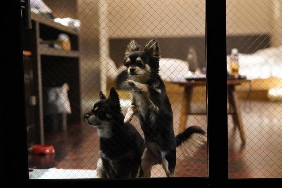 ペットと泊まれる隠れ宿 Wa!王国 狗の郷(くのさと)に行ってきました。②_e0340364_03140042.jpg