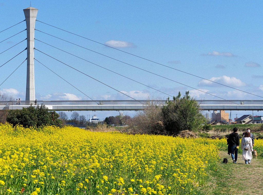 「ラブリバー親水公園うぬき」から 春の花_c0305565_17395410.jpg