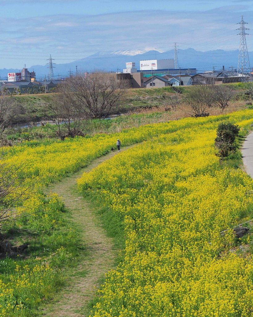 「ラブリバー親水公園うぬき」から 春の花_c0305565_17401184.jpg