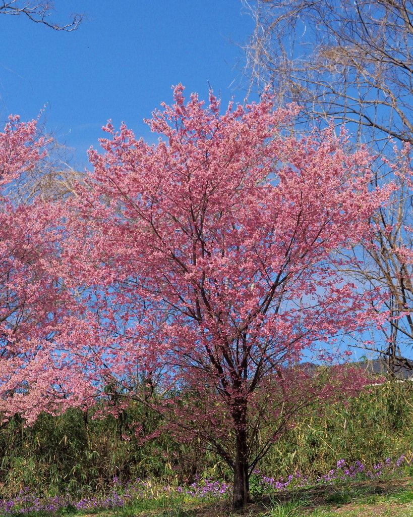 「ラブリバー親水公園うぬき」から 春の花_c0305565_17403268.jpg