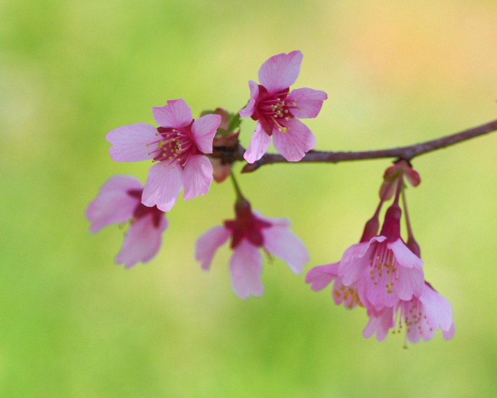 「ラブリバー親水公園うぬき」から 春の花_c0305565_17411082.jpg