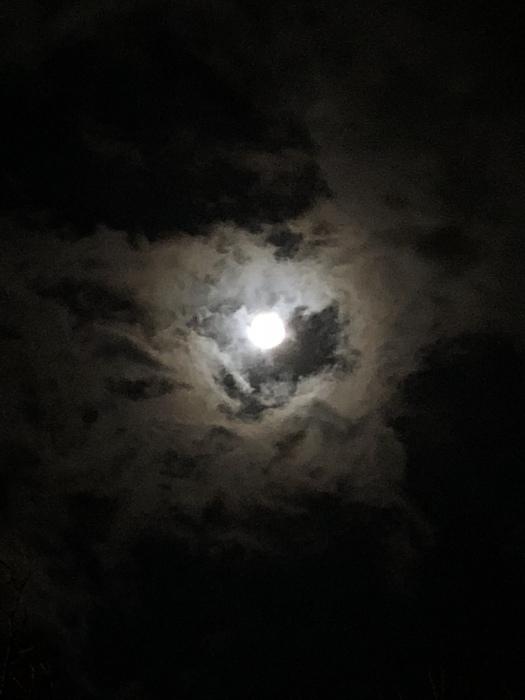 2020年3月 乙女座の満月と河津桜_d0105967_01243784.jpeg