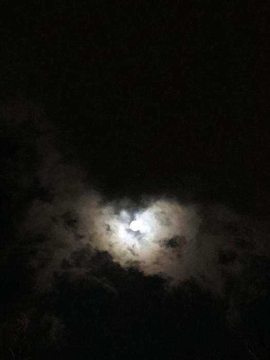 2020年3月 乙女座の満月と河津桜_d0105967_01254201.jpeg