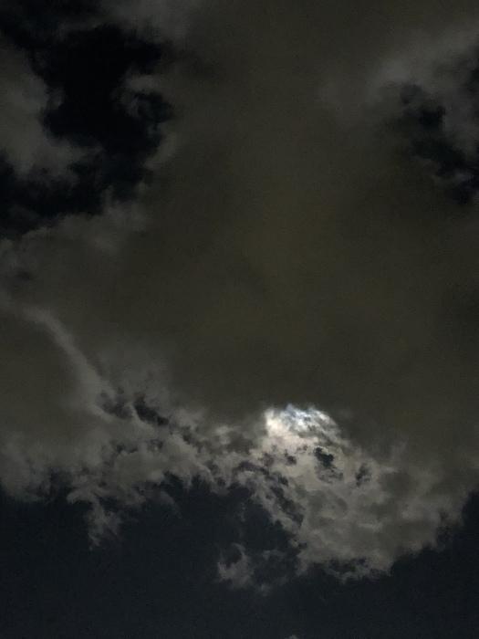 2020年3月 乙女座の満月と河津桜_d0105967_01281766.jpeg