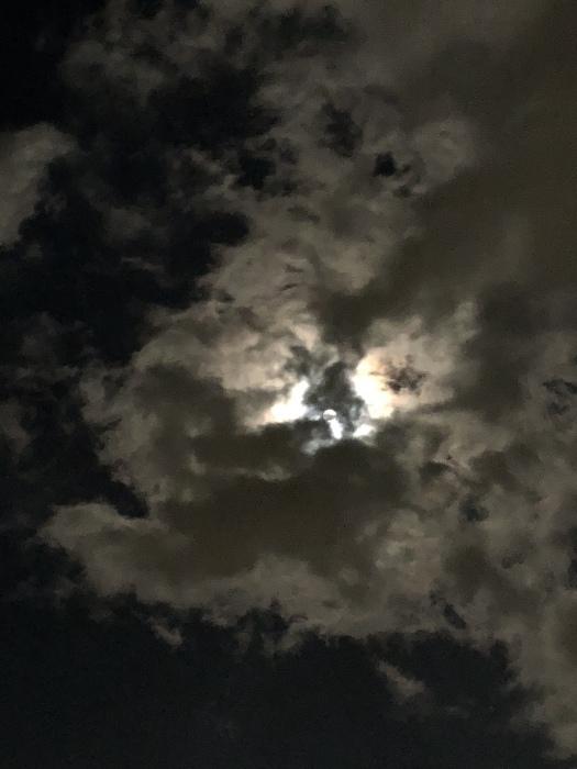 2020年3月 乙女座の満月と河津桜_d0105967_01315077.jpeg