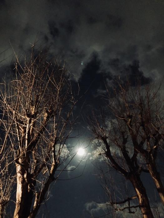 2020年3月 乙女座の満月と河津桜_d0105967_01333469.jpeg