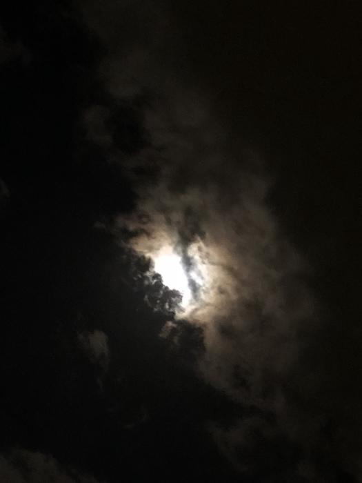 2020年3月 乙女座の満月と河津桜_d0105967_01345509.jpeg