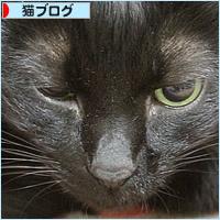 猫エイズと白血病・・・思い出の猫ベッド_a0389088_03321619.jpg