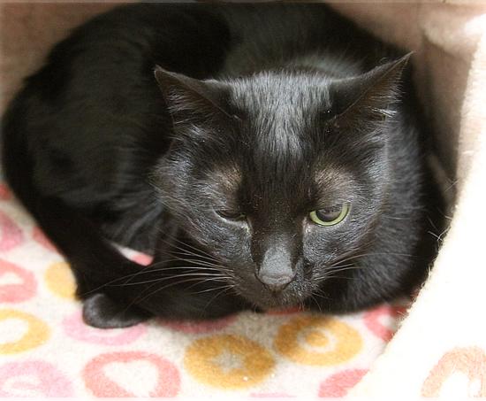 猫エイズと白血病・・・思い出の猫ベッド_a0389088_03321620.jpg