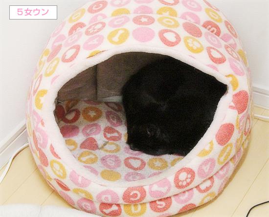 猫エイズと白血病・・・思い出の猫ベッド_a0389088_03321693.jpg