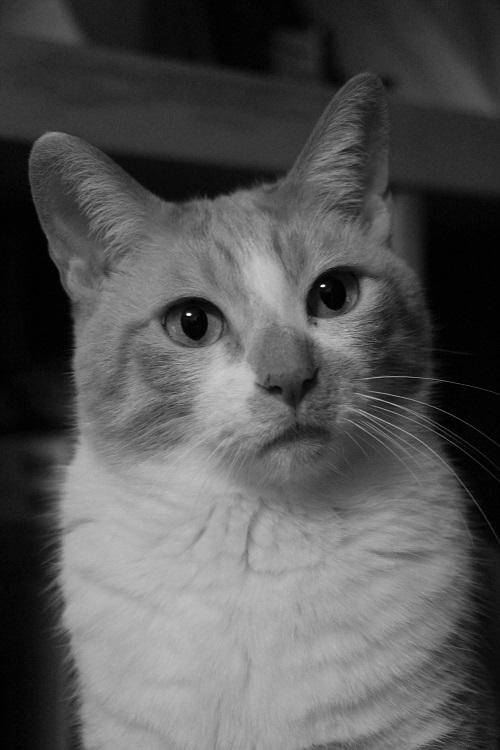 猫の気持_a0333195_20495775.jpg